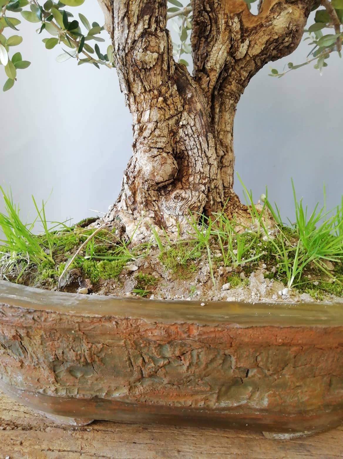Tree Bark pot detail